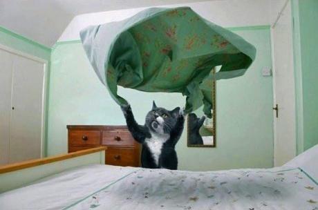 chat qui fait le lit