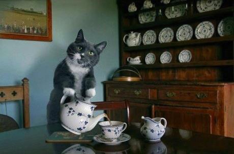 chaton qui sert le thé