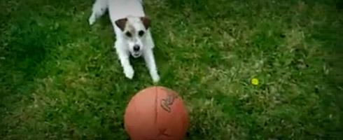 chien-footballeur