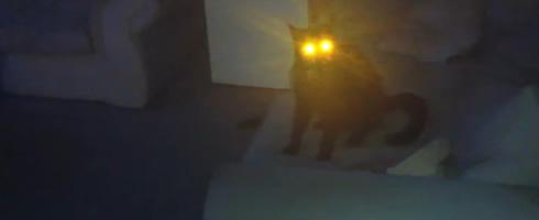 laser-cat