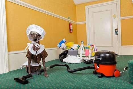 un toutou qui fait le ménage