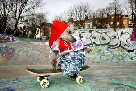chien qui fait du skate