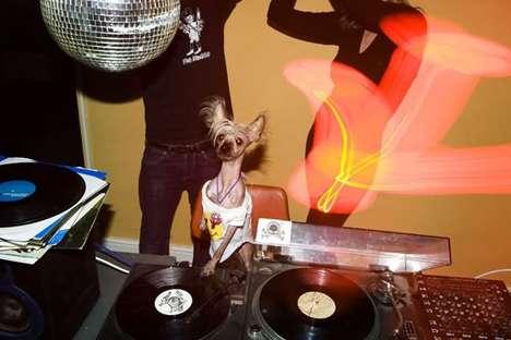 chien dj qui parodie David Guetta