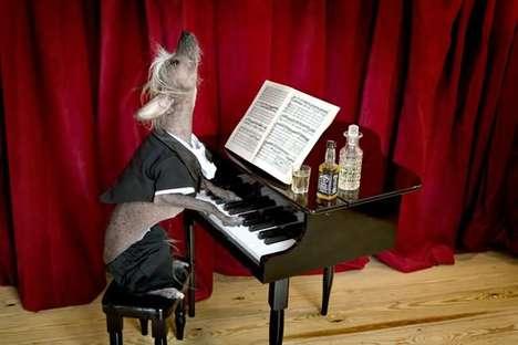 chien au piano