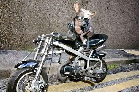 chien sur une moto