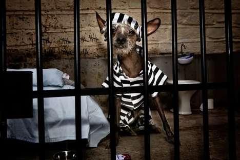 chien en prison