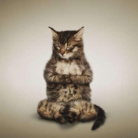 chat qui fait du yoga