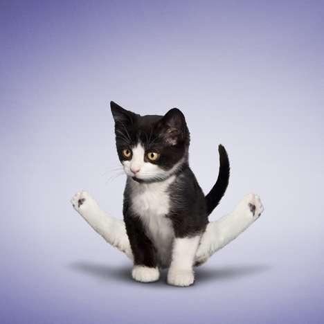 chaton qui fait du yoga
