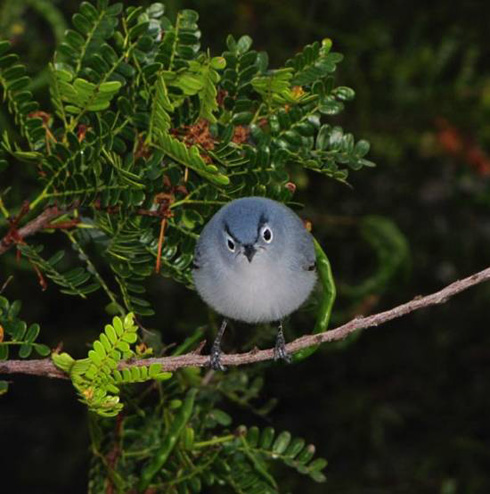 angry bird in real life