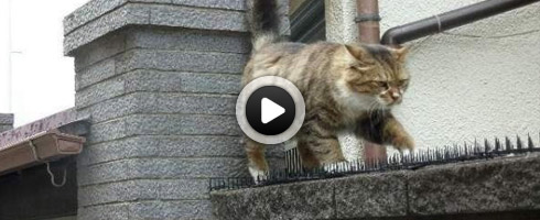 chat-amoureux