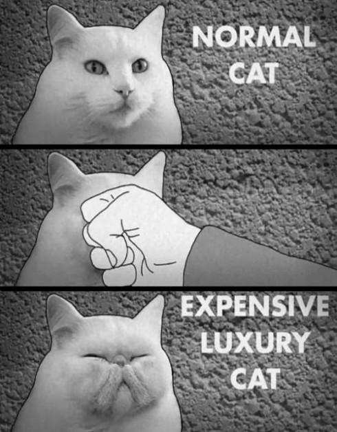 Qu'est-ce qu'un chat de luxe?