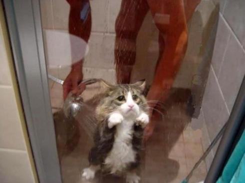 Un chat qui n'aime pas la douche