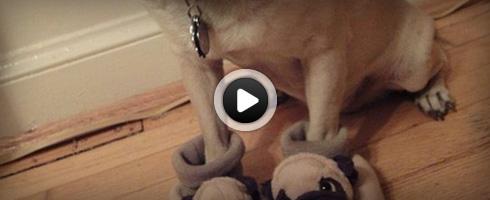 chien-avec-des-pantoufles