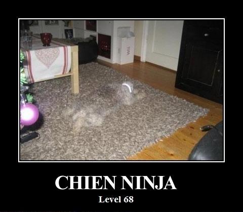 Un chien Ninja