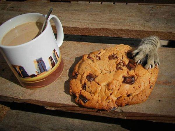 chat-cookie